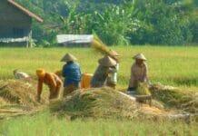 Peningkatan Produksi, Presiden Minta Skema KUR Khusus Petani Diprioritaskan
